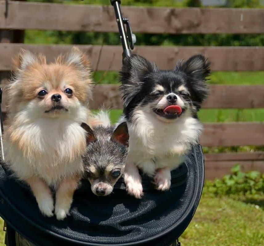 1DAY:家族と愛犬をホームケアできる ペットセルフケアセラピスト講座