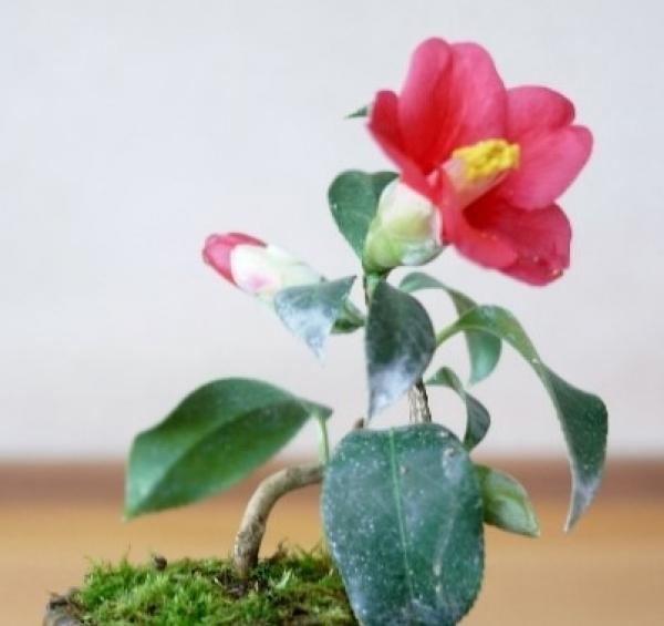 【三木校】1DAY:手のひら盆栽 入門講座 11月