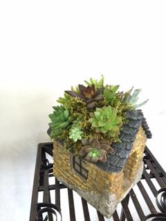 体験:アートに楽しむ多肉植物・3Day教室 8月~