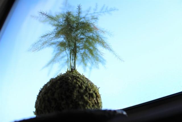 1Day:~ちいさな四季を感じよう~ 苔玉づくり講座・10月