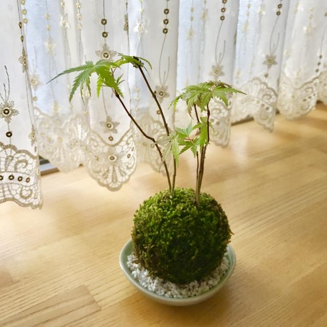 1Day:~ちいさな四季を感じよう~ 苔玉づくり講座・高松本校/4月