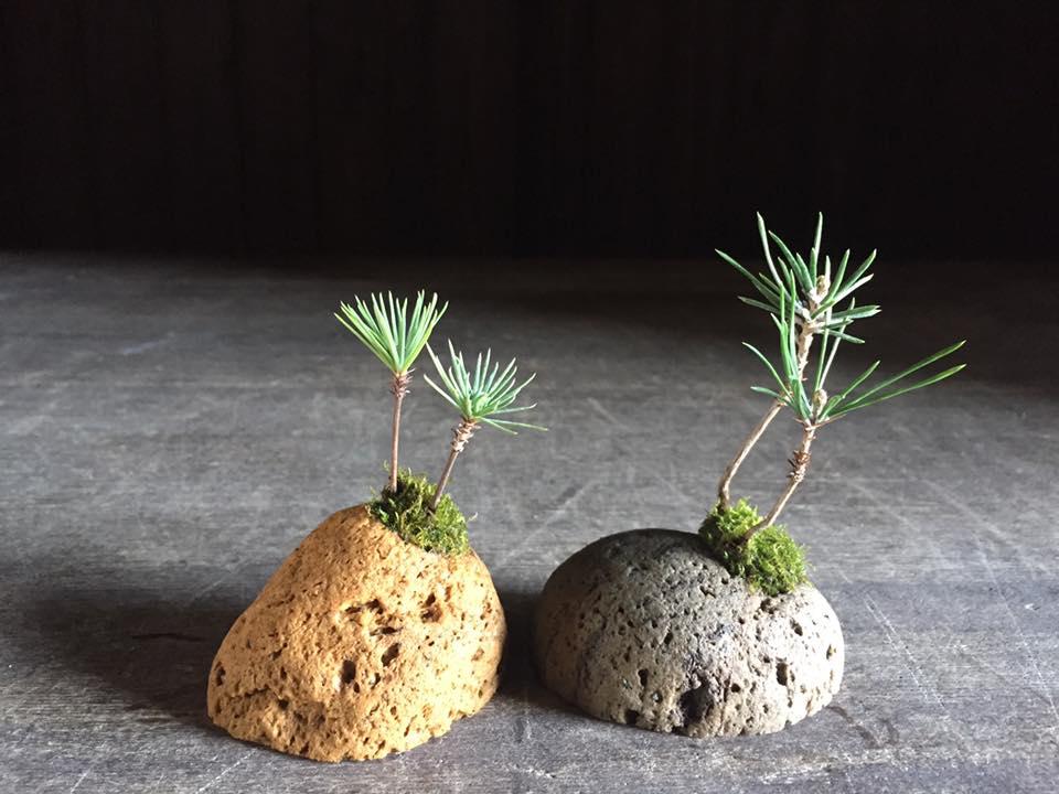 夏休み1Day:和の植物に触れよう!軽石の小さな盆栽づくり 7月30日