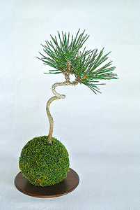 三越:~和の植物を身近に~ 苔玉・盆景教室