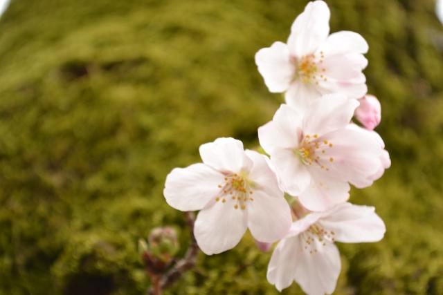 1Day:~ちいさな四季を感じよう~ 苔玉づくり講座・高松本校/2月