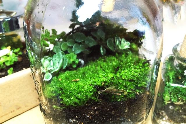1Day:苔のテラリウム~ヒーリングボトルガーデン~ 8月