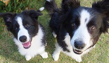 単発:座学+屋外実習で分かる・できる 英国流愛犬しつけ講座